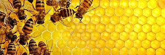 honey-bees.jpg