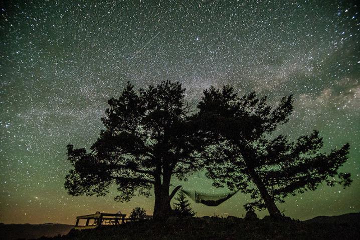 Stars & Trees.jpg