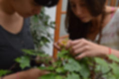 Asesoría en jardinería