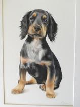 Spaniel portrait drawing