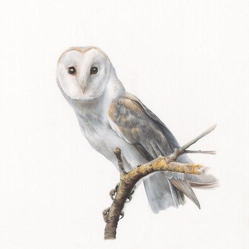"'BARN OWL' (8.5""X6.5"" Image) Giclee print"