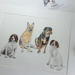Large Group dog portrait