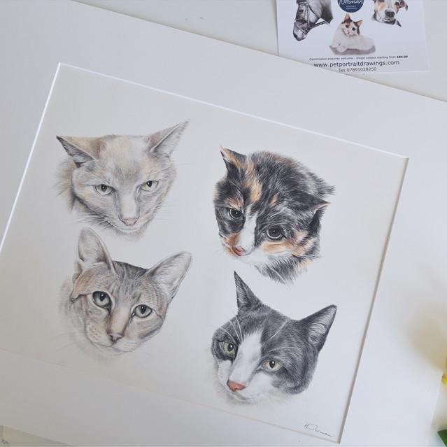 Large colour cat portrait