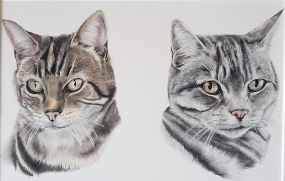 Cat colour portrait