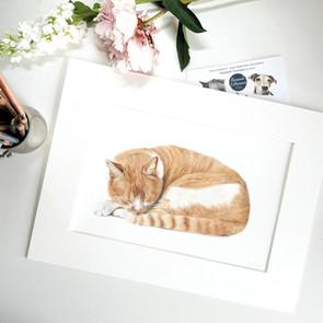 Cat sleeping pencil portrait