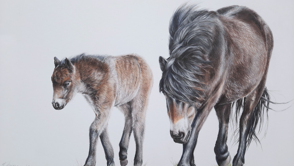 BY YOUR SIDE, Exmoor Pony and foal