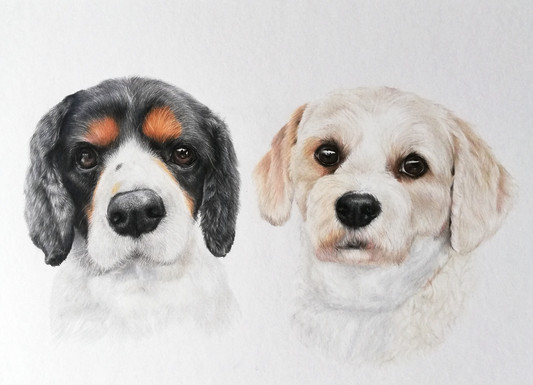 King Charles and terrier pet portrait