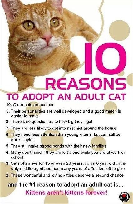 adopt adult.jpg