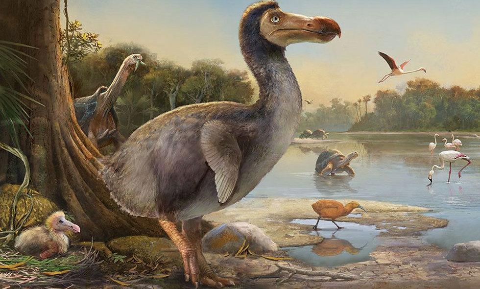 Dodo Birds Can Divide
