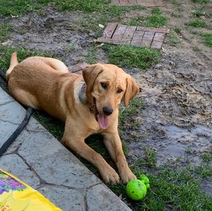 Daisy: Canine Team Leader
