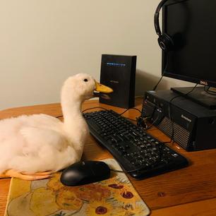 Quackerton: Registration