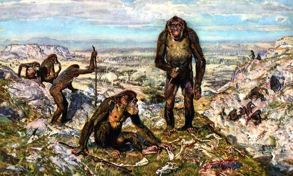 evolution monkeys humans natural selection Science classes online kid grades homeschool curriculum online programs virtual