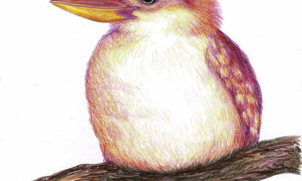Pink Kookaburra