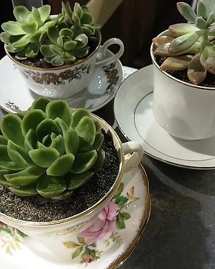 teacup2.webp