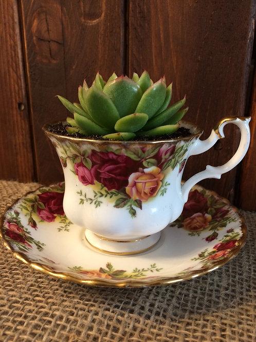 Teacup & Saucer Planter