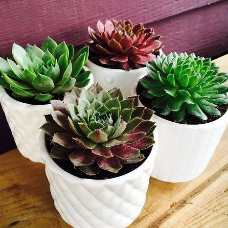 Contempory Planters