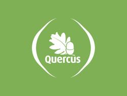 quercus-botão--