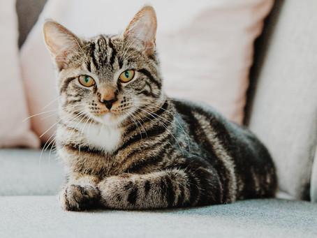 Por que gatos são mais independentes que cachorros?