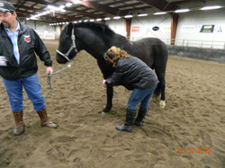 Equine First Aid, Horse, education