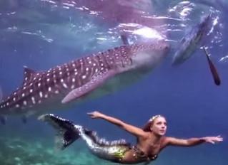מי היא בת הים ששוחה עם כרישים ולויתנים