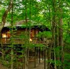 Huisje in het bos.jpeg