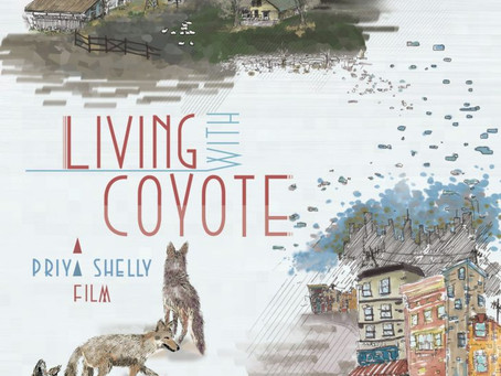 """""""Living With Coyote"""" Now Streaming on National Geographic"""