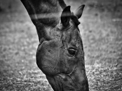 Casares_VELEZ SARFIELD_10_Equus