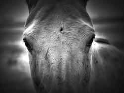 Casares_VELEZ SARFIELD_09_Equus II