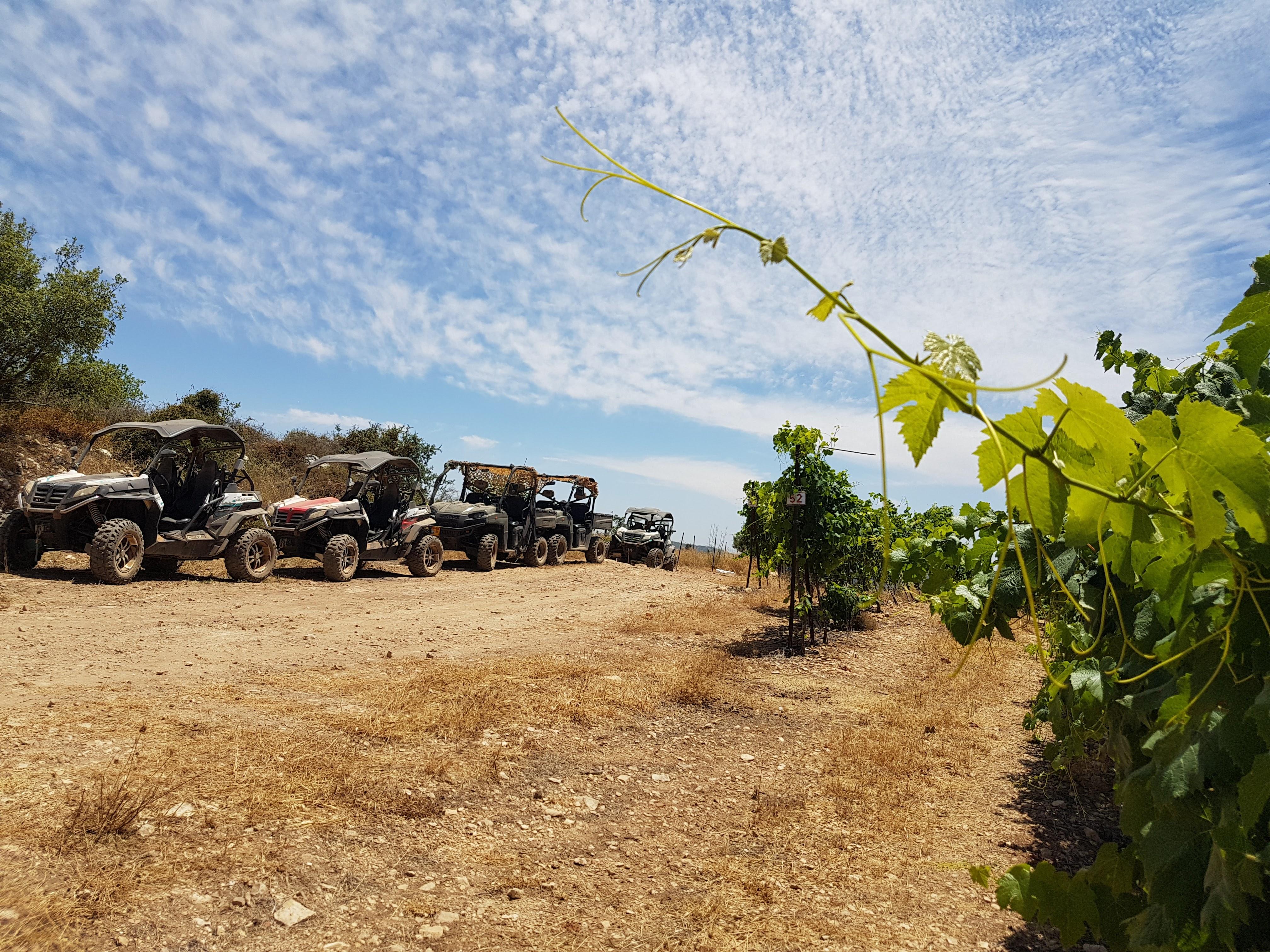 Kastel vinyards