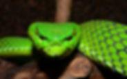 fonds-ecran-serpent-2.jpg