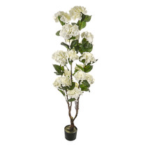 Potted Hydrangea Tree