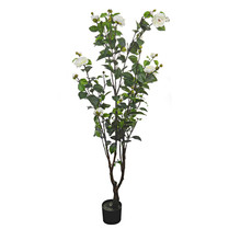 Potted Camellia Tree