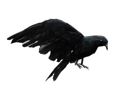 Realisitc Black Bird / Crow