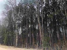 40_acres_Cranberry_225px.jfif