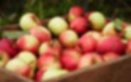 rappel-de-pommes-granny-smith-et-gala-en