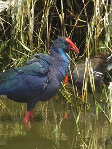yeruham-park-birding-1.jpg