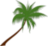 palm-1.png