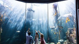 Family pointing a fish in the tank.jpg