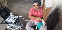 Ultrasoundequine.jpeg