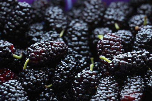 Select Mulberry Trees