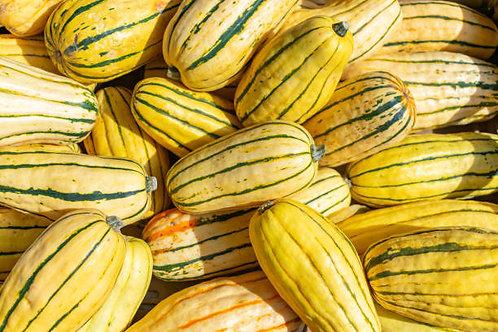 Delicata Squash Seed