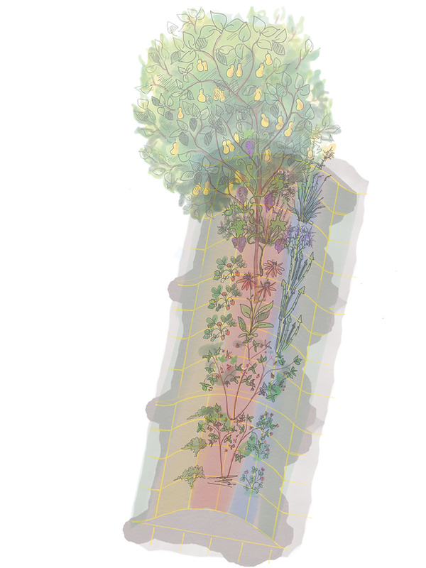EdibleHedgeDesign.NEW.png