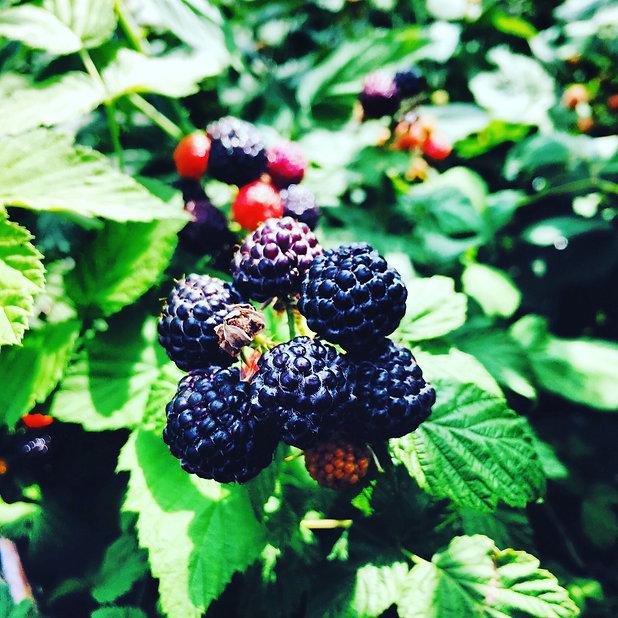 409_BlackRaspberry_Inspires.jpg