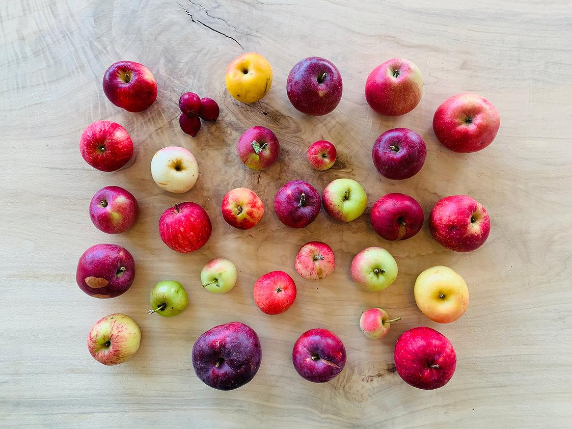 Apple_Diversity.jpg