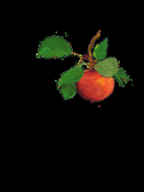 Heirloom Apple Watercolor