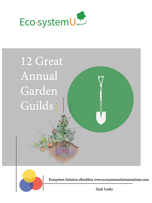 12 Great Annual Garden Guilds