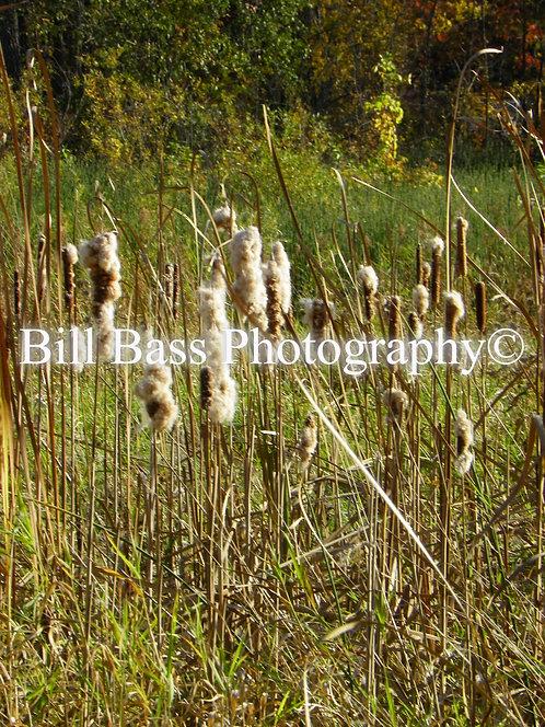 Bobcat Trails