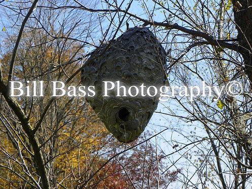 Bee Hive 2