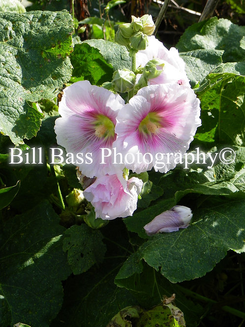 Pink Flower 7