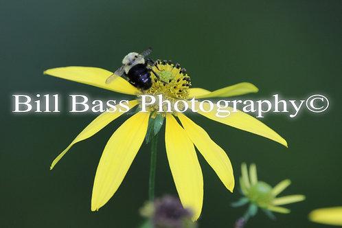Yellow Flower 5